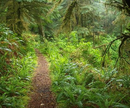 hiking-trails-near-The Oregon Trail