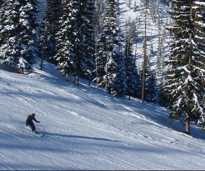 skiing-trails-near-Kimberley Alpine Resort