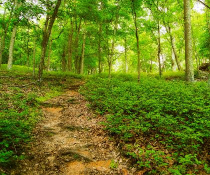hiking-trails-near-The Doubles, Kentucky_Virginia