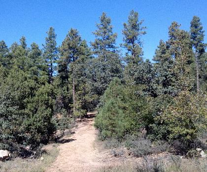 hiking-trails-near-West White Pine Mountain, Colorado